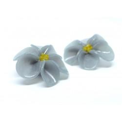 Hibiscus violets