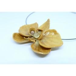 Orchidée dorée